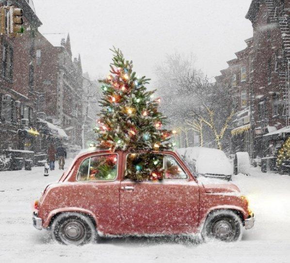 big tree, small car