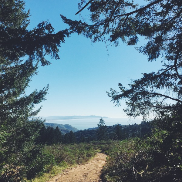 View from Dipsea Trail