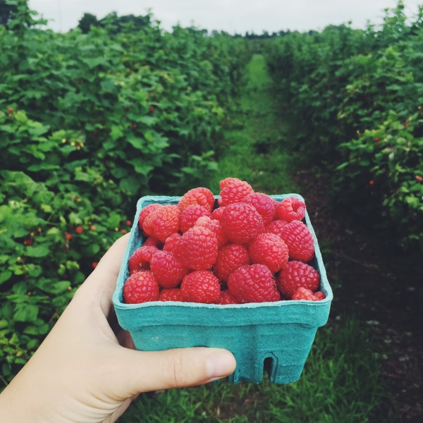 Raspberry fields forever...